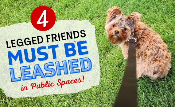 Dogs Leashed in Public Spaces - Newsflash